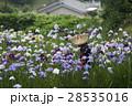 花菖蒲が満開のせせらぎ公園の花摘み娘 28535016