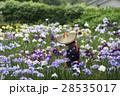 花菖蒲が満開のせせらぎ公園の花摘み娘 28535017