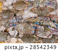 氷 かに 魚介類の写真 28542349