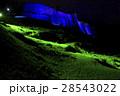 1月沖縄 今帰仁城・主郭城壁ライトアップ 28543022