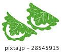柏餅 端午の節句 水彩画のイラスト 28545915