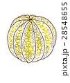 グレープフルーツ 皮剥き 28548655