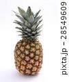 パイナップル 28549609