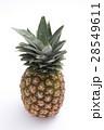 パイナップル 28549611