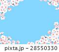 桜 春 フレームのイラスト 28550330