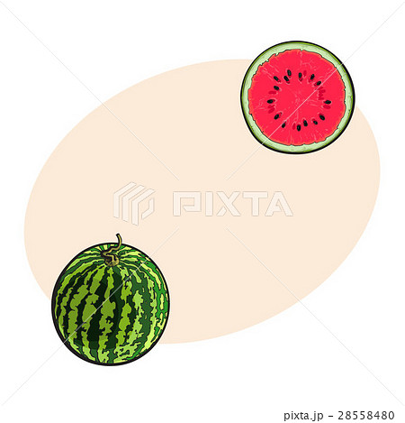 Whole striped watermelon and cut in half, sketch 28558480