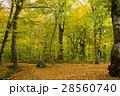 森林 森 秋の写真 28560740