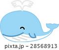 ベクター キャラクター くじらのイラスト 28568913