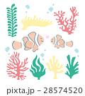 クマノミ サンゴ セット 28574520