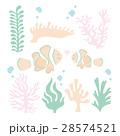 クマノミ サンゴ セット 28574521