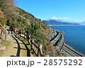 薩埵峠からの東海道風景 そして富士山 28575292