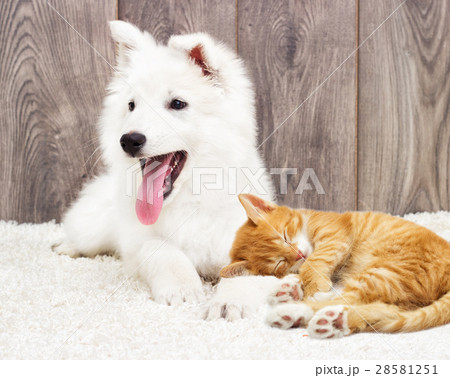 puppy and kitten fluffy carpet 28581251