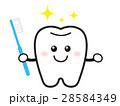 歯 歯ブラシ 虫歯予防のイラスト 28584349