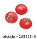 トマト 野菜 果実のイラスト 28592340