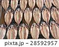 鯖の干物 28592957