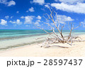 オーストラリアグリーン島 28597437