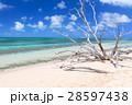 オーストラリアグリーン島 28597438