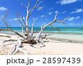 オーストラリアグリーン島 28597439