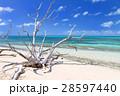 オーストラリアグリーン島 28597440