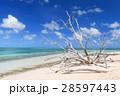 オーストラリアグリーン島 28597443