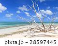 オーストラリアグリーン島 28597445