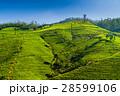 お茶 茶 テラスの写真 28599106