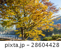 秋の世界遺産 白川郷 28604428