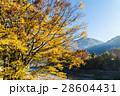 秋の世界遺産 白川郷 28604431