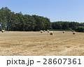北海道 麦稈 ロールの写真 28607361