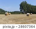 北海道 麦稈 ロールの写真 28607364