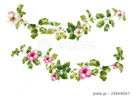 watercolor painting of leaves and flower, on whiteのイラスト素材 [28609087] - PIXTA