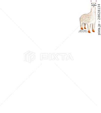 アルパカ あるぱか 動物 28628134