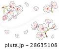 桜の花(ホワイト) 28635108