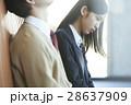 女子高生 高校生 カップルの写真 28637909