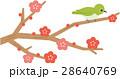 梅の花 梅 花のイラスト 28640769