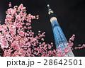 河津桜と東京スカイツリー 28642501