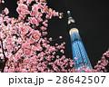 河津桜と東京スカイツリー 28642507