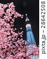 河津桜と東京スカイツリー 28642508