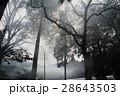 霧 木々 自然の写真 28643503