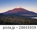 暁 あけぼの 夜明けの写真 28643939