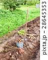 農作物 収穫 実りの写真 28645353