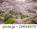 満開の桜 28648879