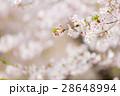 葉桜 28648994
