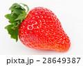 いちご イチゴ 苺の写真 28649387