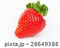 いちご イチゴ 苺の写真 28649388