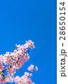 桜 花 ソメイヨシノの写真 28650154