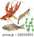 川の生き物 28650893