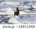 大鷲 猛禽類 鳥の写真 28651066