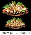 ナッツ ナット 種実類のイラスト 28658597