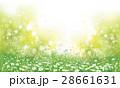 カモミール フラワー 花のイラスト 28661631